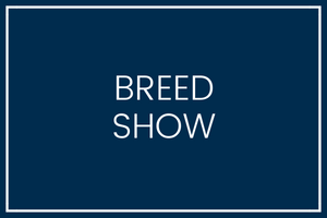 Bunbury Ag Show - Open Breed Section