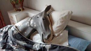 Horse resuce workshops
