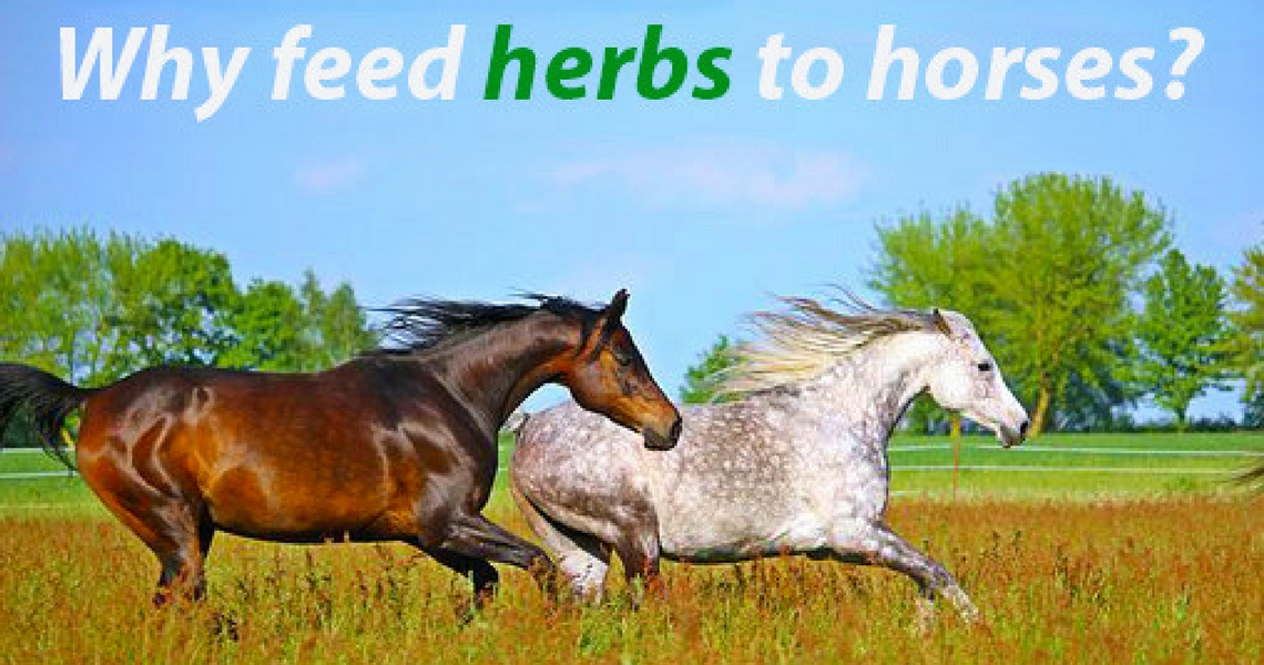 Feeding herbs to horses: the Dodson & Horrell range