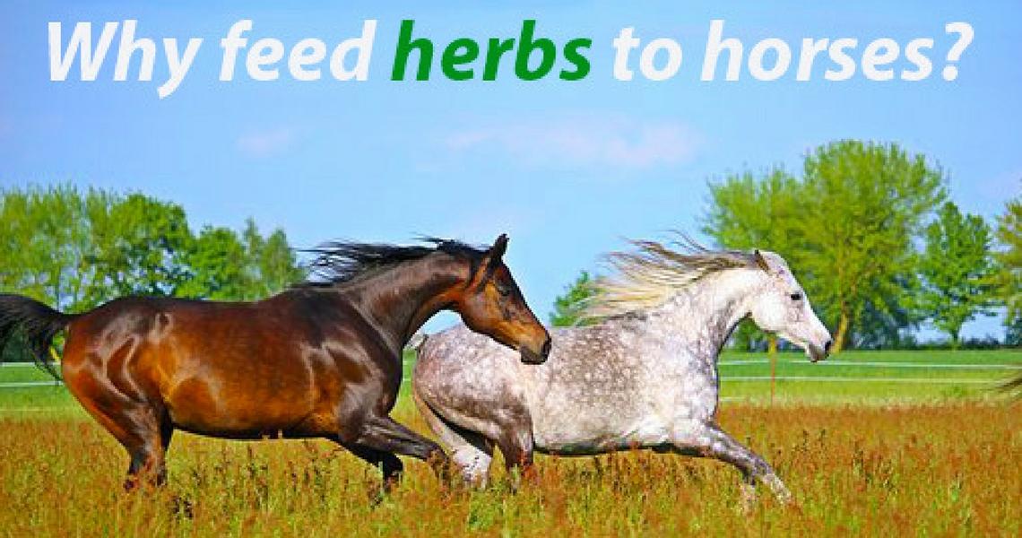 Feeding herbs to horses: the Dodson & Horrell range