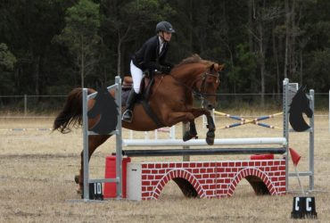 Holsteiner cross thoroughbred mare