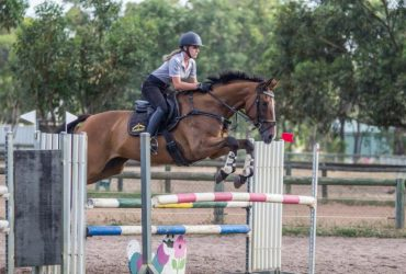 Perfect show jumper/eventer/allrounder-Priced for a quick sale!