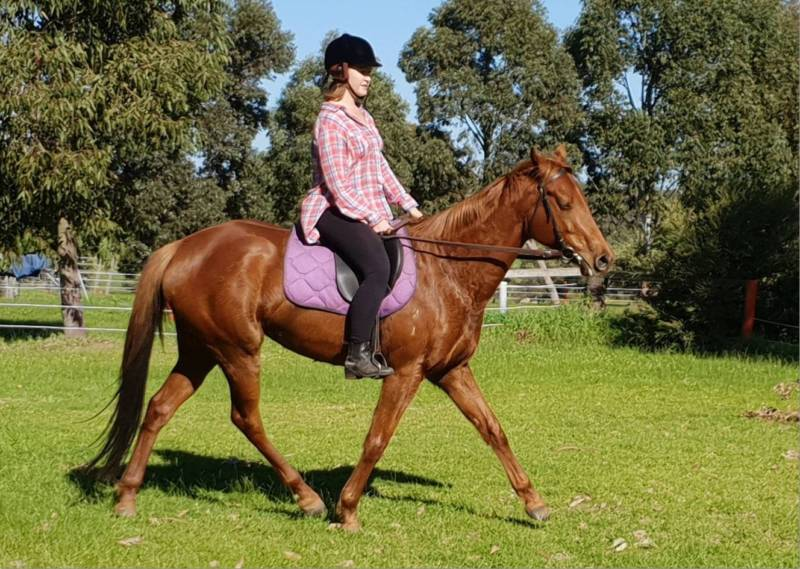 Nicky- 5 Year Old  Unraced  Chestnut Thoroughbred Filly