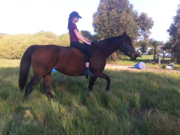 BIG AND BEAUTIFUL THOROUGHBRED MARE