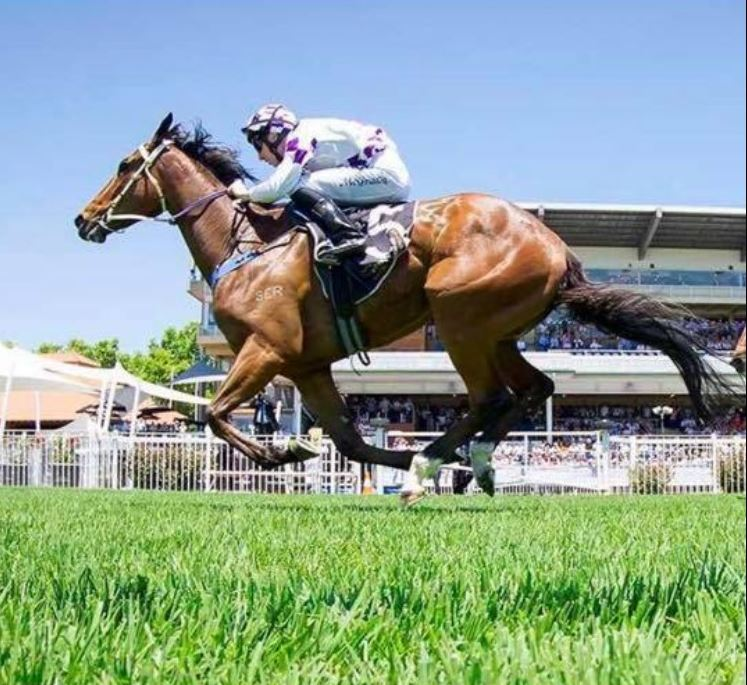 Portalian – 4 Year Old Thoroughbred Off the Track