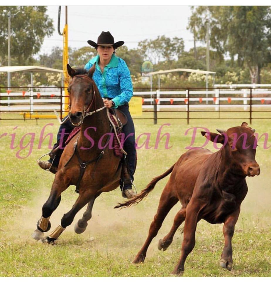 Price reduced! Registered ASH Gelding 15 years