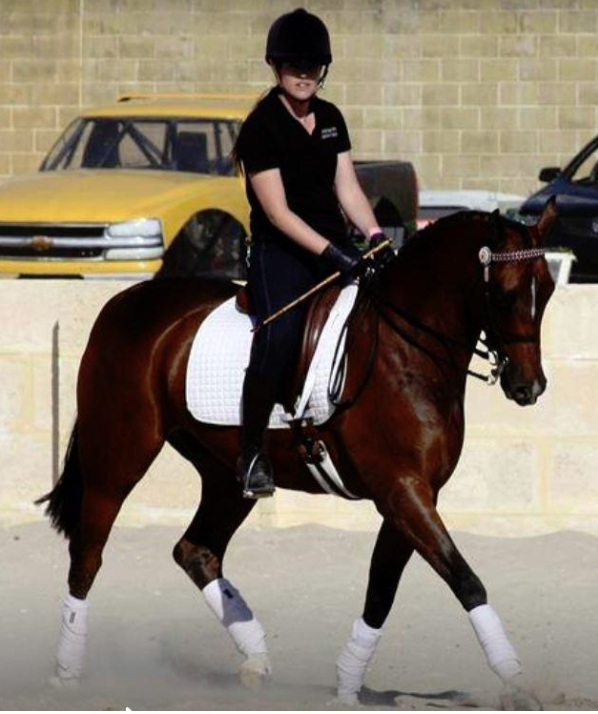 A quality, well educated gelding with outstanding confirmation!