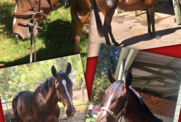 3 Year Old Filly by Chicago