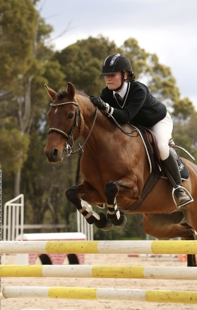 Eventing Pony Cavalletti Equine Marketplace
