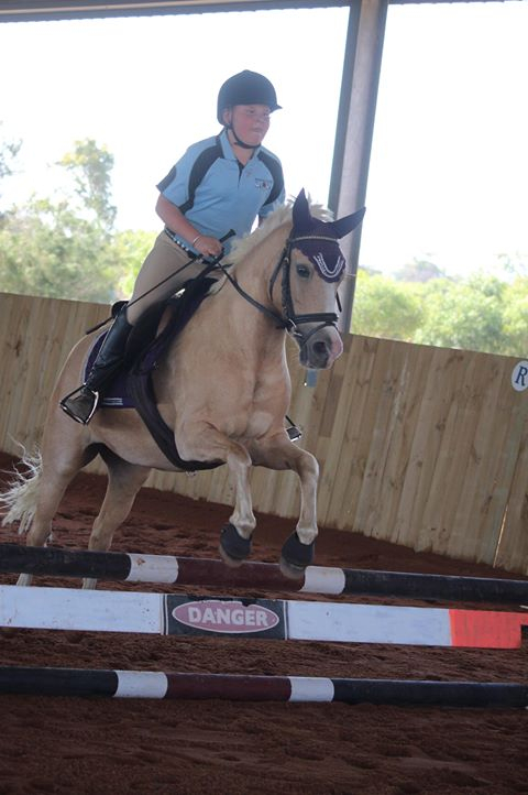 Experienced Dressage and Jumping Pony