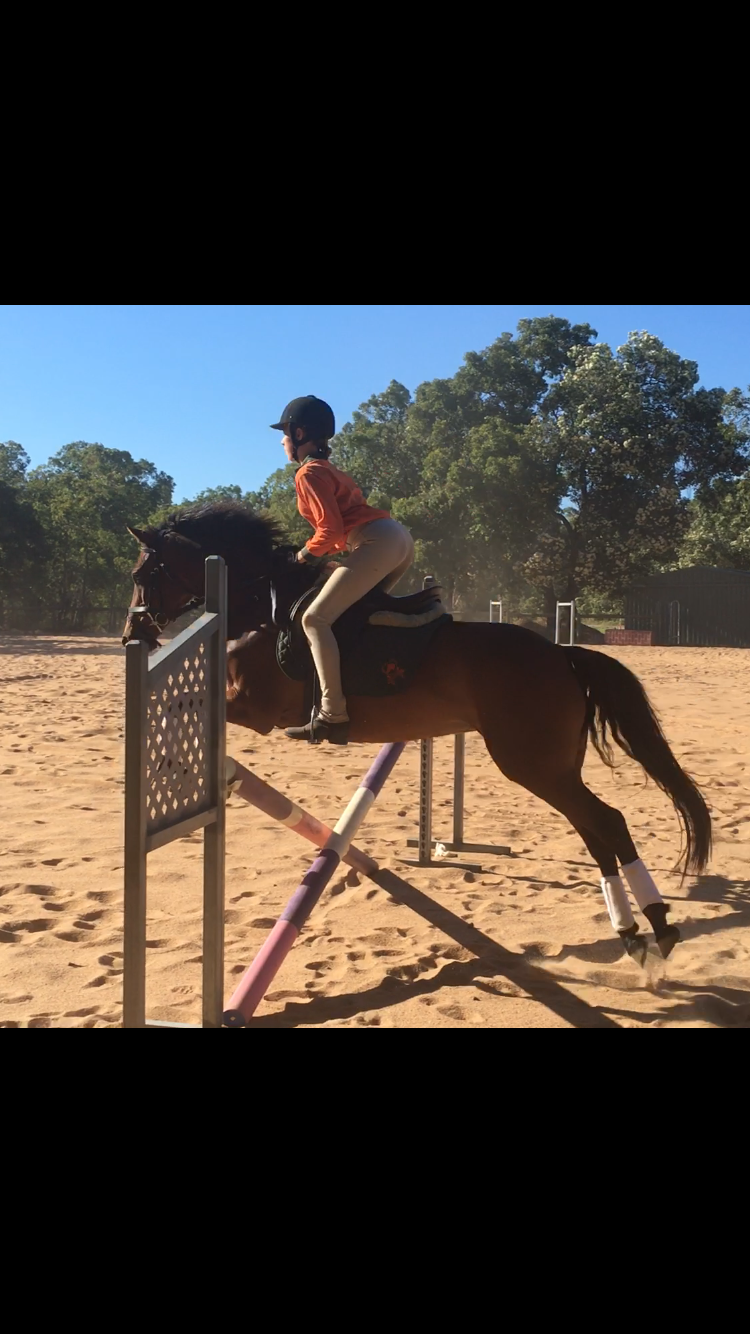 Fantastic all rounder pony mare for confident competent rider