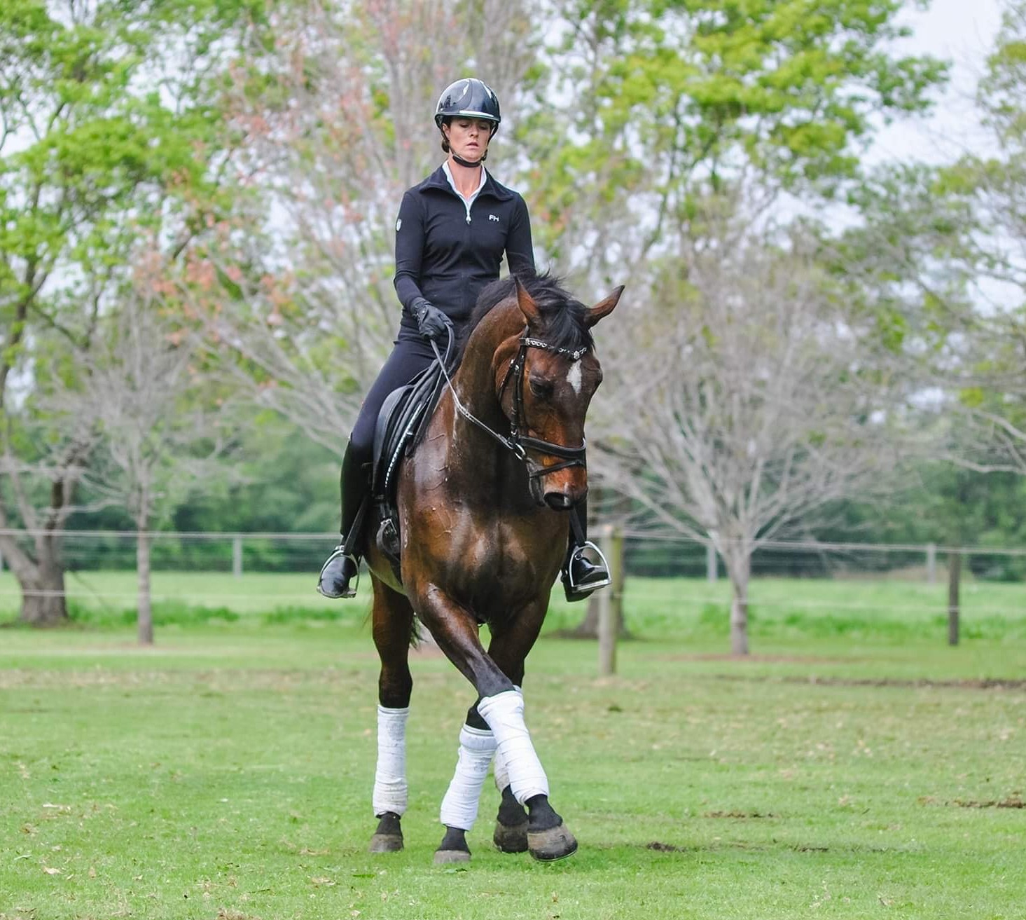 Warmblood Gelding 16.3hh, 9 yrs by Welfenadel (Imp)