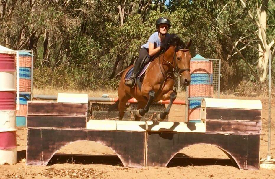 Keen and bold showjumping/ eventing prospect