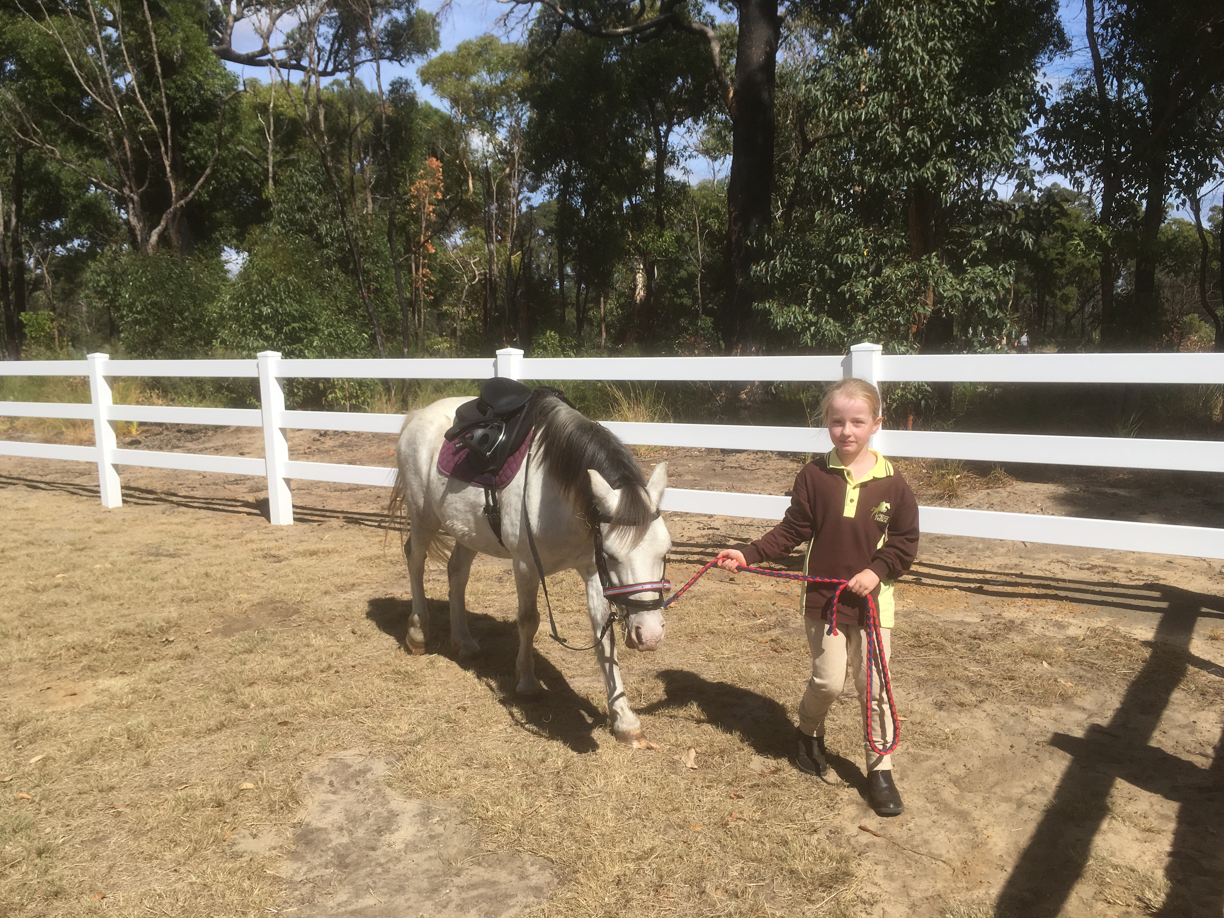 Adorable and capable Welsh gelding