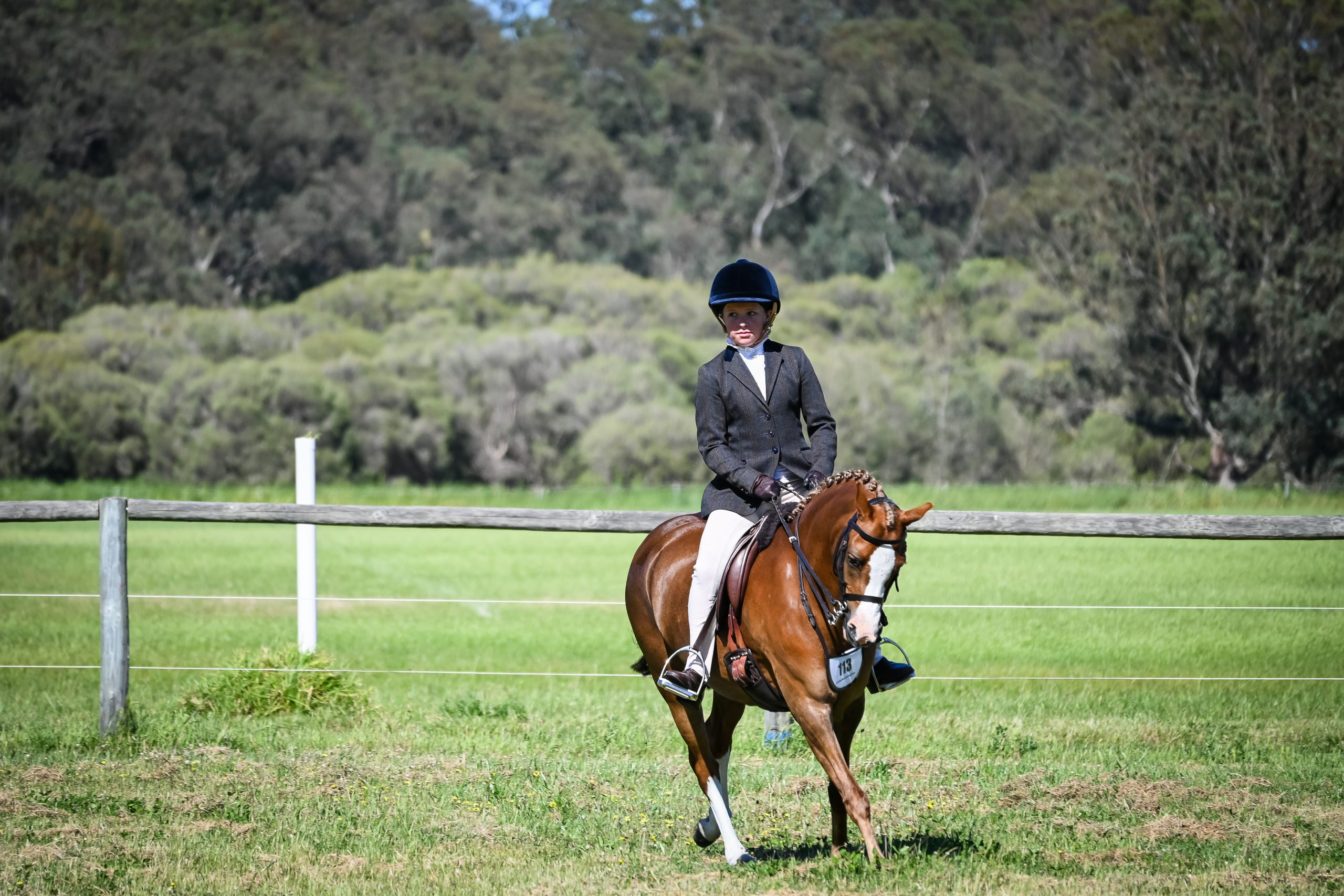 Exquisite Show Pony that can do it all. A true stand out pony to own!