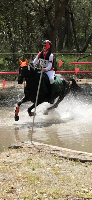 Talented competition pony