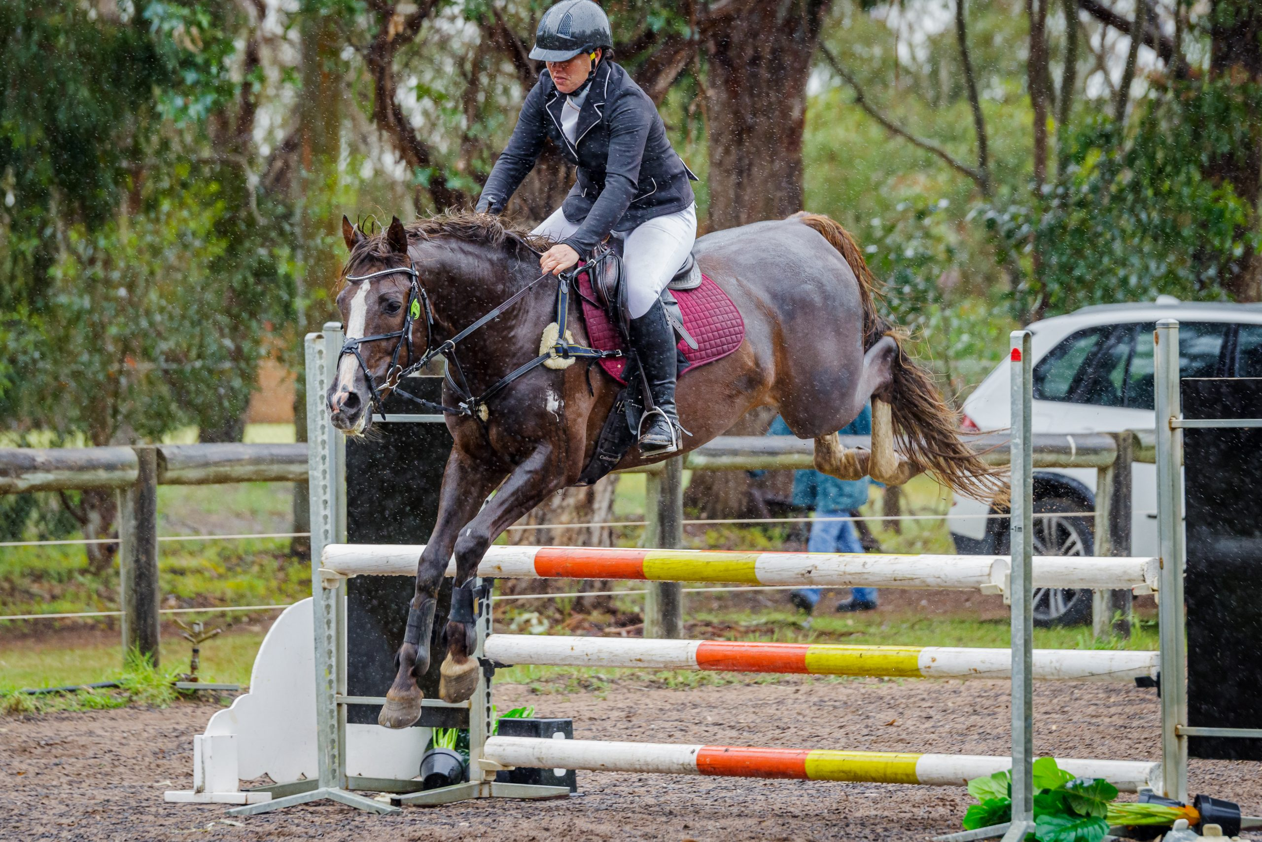 Warmblood Pony Stallion – sire of up & coming performance horses & ponies