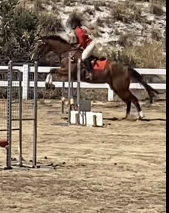 Free off property lease! Project horse with jumping potential
