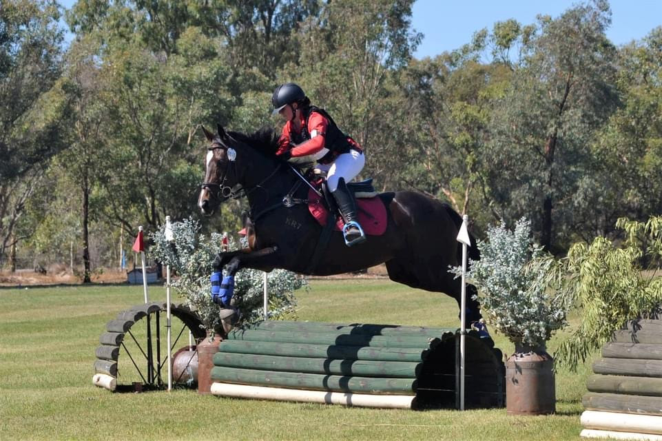 Show jumper /eventer with talent to burn