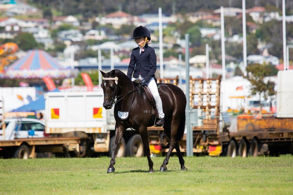 Talented dressage pony